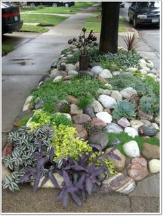 rock+garden+ideas+56