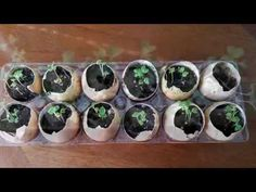 How to Start Seeds Indoors in Egg Shells for Spring Planting! - YouTube