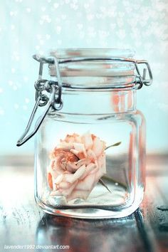 When your rose has lost it's bloom: Make this DIY rosewater toner!