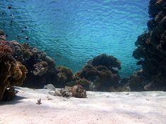 views from below, Jackson Reef, Sharm el Sheikh, Egypt