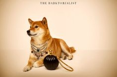 TheBarktorialist - posh pets living the luxe life