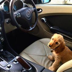Sasha on social media: Kimberley has been busy uploading cute pics of her puppy Sasha, sin...