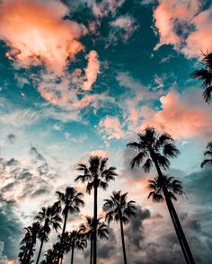 blue sky with clouds, tall palm trees, aesthetic iphone wallpaper Aesthetic Iphone Wallpaper, Aesthetic Wallpapers, Iphone Wallpaper Vintage Hipster, Hipster Vintage, Style Hipster, Indie Hipster, Tumblr Wallpaper, Tree Wallpaper, Ipad Mini Wallpaper