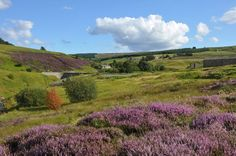 Heather covers a hillside near Allenheads in Northumberland Durham City, Hadrian's Wall, Slow Travel, Yorkshire Dales, Fringes, New Job, Newcastle, Beautiful Landscapes, Drill