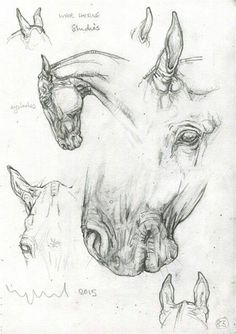 Drawing Animals in the Zoo - Drawing On Demand Zirgai piesti Horse Drawing Tutorial, Pencil Drawing Tutorials, Drawing Ideas, Horse Drawings, Animal Drawings, Art Drawings, Pencil Drawings, Zoo Drawing, Painting & Drawing