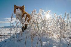 Photo by Иван Кислов (http://xpax.35photo.ru/photo_604466/)