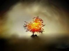 burning-bush1