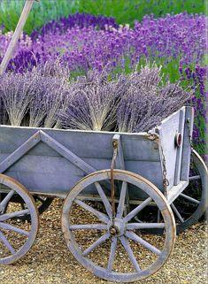 Lavender cart <3