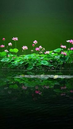 Pond Painting, Beautiful Places, Beautiful Pictures, Good Morning Prayer, Lotus Pond, Gif Photo, Lily Pond, Good Morning Images, Water Lilies