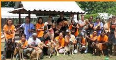 Planning a trip to Thailand and a visit to Soi Dog? Soi Dog welcomes visitors and our shelter is open Monday to Friday, 9.00am to midday and again from 1.00pm to 5.00pm. Guided tours happen 3 times a day: 9.30am, 11.00am and the last one at 1.30pm.  Please email volunteering@soidog-foundation.org for more information.