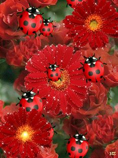 The best GIFs from around the web Rare Flowers, Beautiful Flowers, Ladybug Art, Ladybug Garden, Good Morning Gif, Beautiful Gif, Beautiful Pictures, Glitter Graphics, Gif Pictures