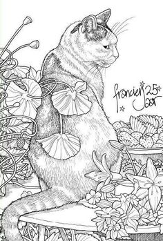 Cat and strawberries Cat Coloring Page, Animal Coloring Pages, Coloring Book Pages, Coloring Sheets, Colorful Drawings, Colorful Pictures, Cabras Animal, Free Adult Coloring, Cat Colors