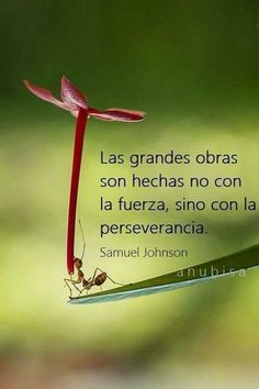Perseverancia ✿ Quote / Inspiration in Spanish / motivation for learning Spanish… Spanish Words, Spanish Quotes, Motivational Quotes In Spanish, Christmas Quotes, Learning Spanish, Positive Thoughts, Sentences, Wise Words, Me Quotes