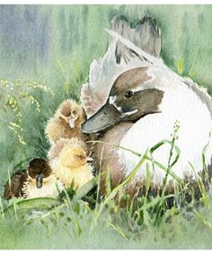 Mother Duck - Watercolour Artists Derby