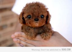 It's so fluffy I'm going to die