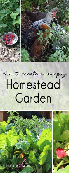 Learn how to create an amazing homestead garden and start growing tons of herbs, fruit and vegetables in your own gorgeous homestead garden.