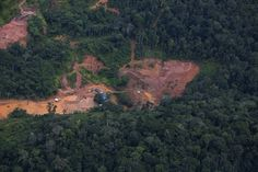Forest crime scene: Amazon.