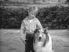 """Lassie"" (and Timmy)...what a good dog!"
