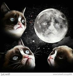 Grumpy Cat on Pinterest | Grumpy Cat, Grumpy Kitty and ...