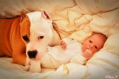 Pitbull and baby