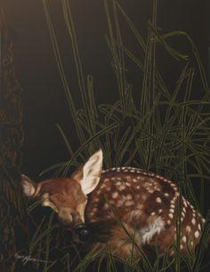 Fawn in the Tall Grass Scratchboard Art, Scratch Art, India Ink, Black Paper, Wildlife Art, Beautiful Artwork, Art Boards, Pet Birds, Deer