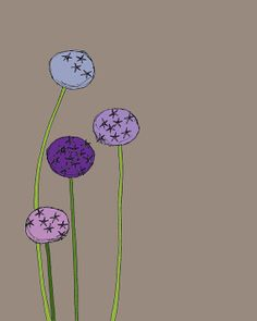 Fine Art Print of Lavender Purple Allium Flowers, $19