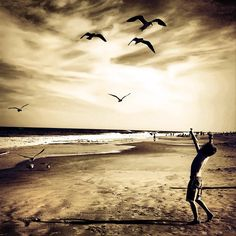 """""""Dancing With Gulls"""" The Instacanvas gallery for thephotomomma. Buy Instagram art from thephotomomma and photography."""