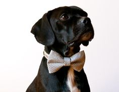 puppy and bow tie? simply adorable. Going to need lots of these for Maggie's puppy she is getting in a few weeks