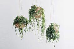 5 Plantes que vous Allez Vouloir Adopter Tout de Suite