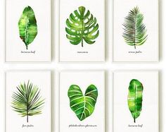 Palm leaf watercolor painting, Set of 3 botanical painting, Green leaf artwork This set of 3 palm leaf watercolor art will make an elegant collection for your living room or bedroom. They were painted by me, Tinarosa Tam. They are a reproduction of my original watercolor paintings. This listing includes: 1. Areca palm 2. Monstera 3. Banana leaf SMALL & MEDIUM SIZE PRINT • 4x6 / 5x7 / 8x10 / 11x14 / 12x18 / 13x19 • Printed on heavy weight, acid free fine art car...