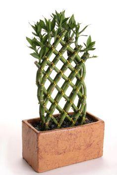 indoor plants low light | houseplants, low lights and sunlight