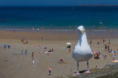 Bird - St Malo (Bretagne -France) by Bruno Mallet
