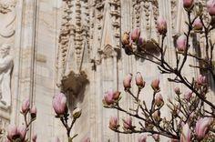 Roses in bloom outside the black kings castle