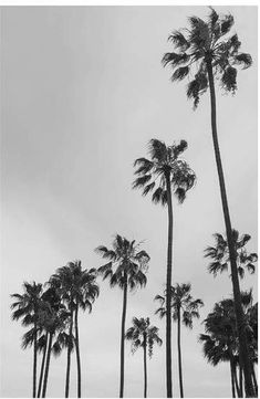ideas palm tree quotes california los angeles for 2019 Los Angeles Wallpaper, Black And White Photo Wall, Black And White Pictures, Aesthetic Iphone Wallpaper, Aesthetic Wallpapers, Palm Trees Tumblr, Los Angeles Palm Trees, Palm Tree Quotes, California Palm Trees