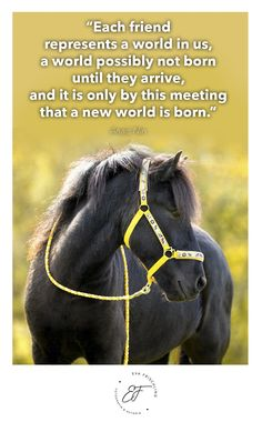 """""""Each friend represents a world in us, a world possibly not born until they arrive, and it is only by this meeting that a new world is born."""" ― Anais Nin Quote - Zitat - of the day - horse - iceland"""