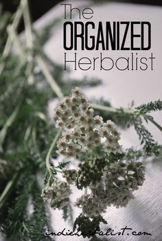 Tips for organizing your herbal tools and supplies! // Indie Herbalist