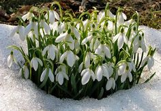 Spring is hailed as the season of flowers, but there are plenty of beautiful flowering plants that bloom in winter, too!