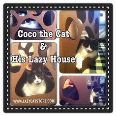 Coco & his Lazy House available @ www.lazycatstore.com Pet Furniture, Lazy, Pets, House, Home, Haus, Houses