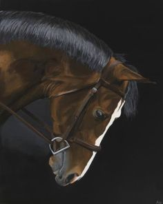 Buy Bridled Bay On Black, a Acrylic on Canvas by Star King from United Kingdom. It portrays: Animal, relevant to: bay, portrait, black, brown, contemporary, equestrian, equine, horse Human civilization lost something special when we lost our proximity to horses. We lost part of ourselves, because our dignity, strength, and courage is inspired by and intertwined with the dignity, strength, and courage of the horse. I paint larger-than-life horse portraits to help reclaim part of that…