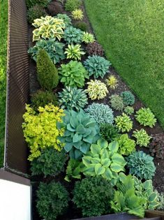 Collection of perennial plants in the flowerbed near the fence