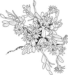 Violeta tricolor dibujo para colorear flores pinterest for Cactus navideno