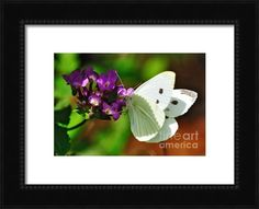 Sold - Dainty Butterfly