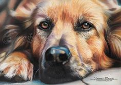Pencil Portrait Drawing Pencil Portraits - colored pencil More Discover The Secrets Of Drawing Realistic Pencil Portraits - Crayons Pastel, Pastel Pencils, Coloured Pencils, Portrait Au Crayon, Pencil Portrait Drawing, Drawing Portraits, Animal Paintings, Animal Drawings, Pencil Drawings
