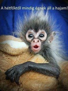Primates, Mammals, Cute Creatures, Beautiful Creatures, Animals Beautiful, Pretty Animals, Cute Baby Animals, Animals And Pets, Funny Animals