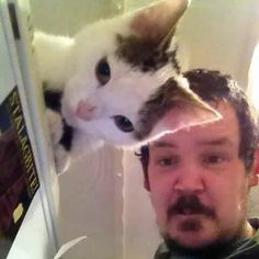 a cat & a man's forehead and  hair matched perfectly