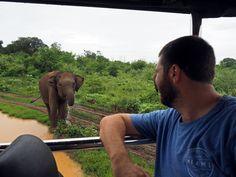Boy staring at Elephants Udawalwe National Park Beautiful Birds, Animals Beautiful, Wild Elephant, D Book, Jungle Cat, River Bank, Photo Diary, African Safari, Bird Species