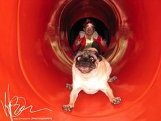 This dog who CANNOT HANDLE THIS SLIDE RIGHT NOW OH MY GOD.