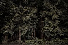 Enchanted forests: British woods and moors at night – in pictures | Art and design | The Guardian Photography Beach, Landscape Photography Tips, Forest Photography, Fine Art Photography, Travel Photography, Birmingham, Brighton, Twilight, Dark Landscape