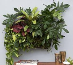 jardines verticales para interiores cuidar de tus plantas es