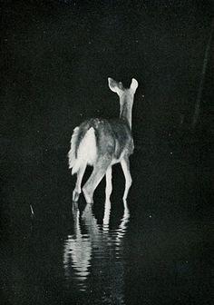 deer, oh my